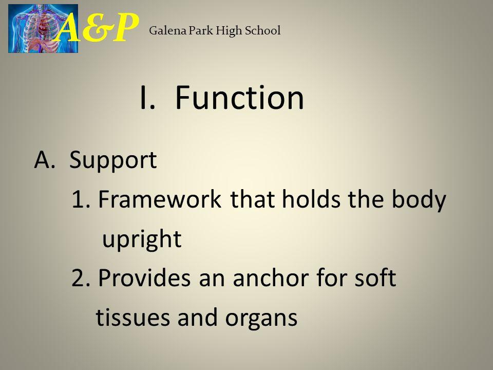 C.Growth and Development 1. Ossification-making bones a.