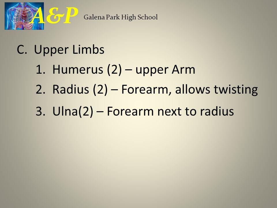C. Upper Limbs 1. Humerus (2) – upper Arm 2. Radius (2) – Forearm, allows twisting 3. Ulna(2) – Forearm next to radius Galena Park High School A&P