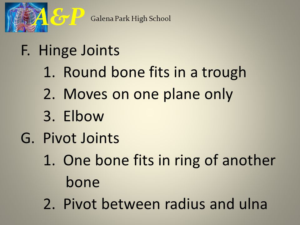 F. Hinge Joints 1. Round bone fits in a trough 2. Moves on one plane only 3. Elbow G. Pivot Joints 1. One bone fits in ring of another bone 2. Pivot b