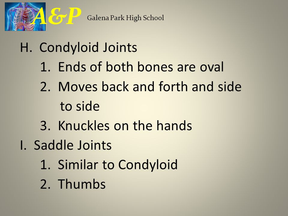 H. Condyloid Joints 1. Ends of both bones are oval 2. Moves back and forth and side to side 3. Knuckles on the hands I. Saddle Joints 1. Similar to Co