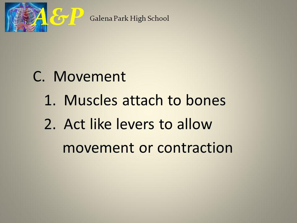 g.Bones grow longer at the epiphyseal plate h. Osteoblasts build bone tissue.