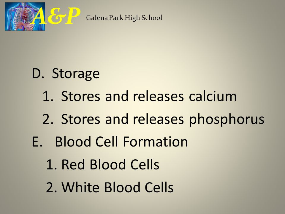 D. Storage 1. Stores and releases calcium 2. Stores and releases phosphorus E.Blood Cell Formation 1. Red Blood Cells 2. White Blood Cells Galena Park