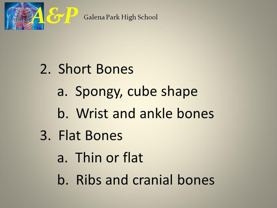 2. Short Bones a. Spongy, cube shape b. Wrist and ankle bones 3. Flat Bones a. Thin or flat b. Ribs and cranial bones Galena Park High School A&P