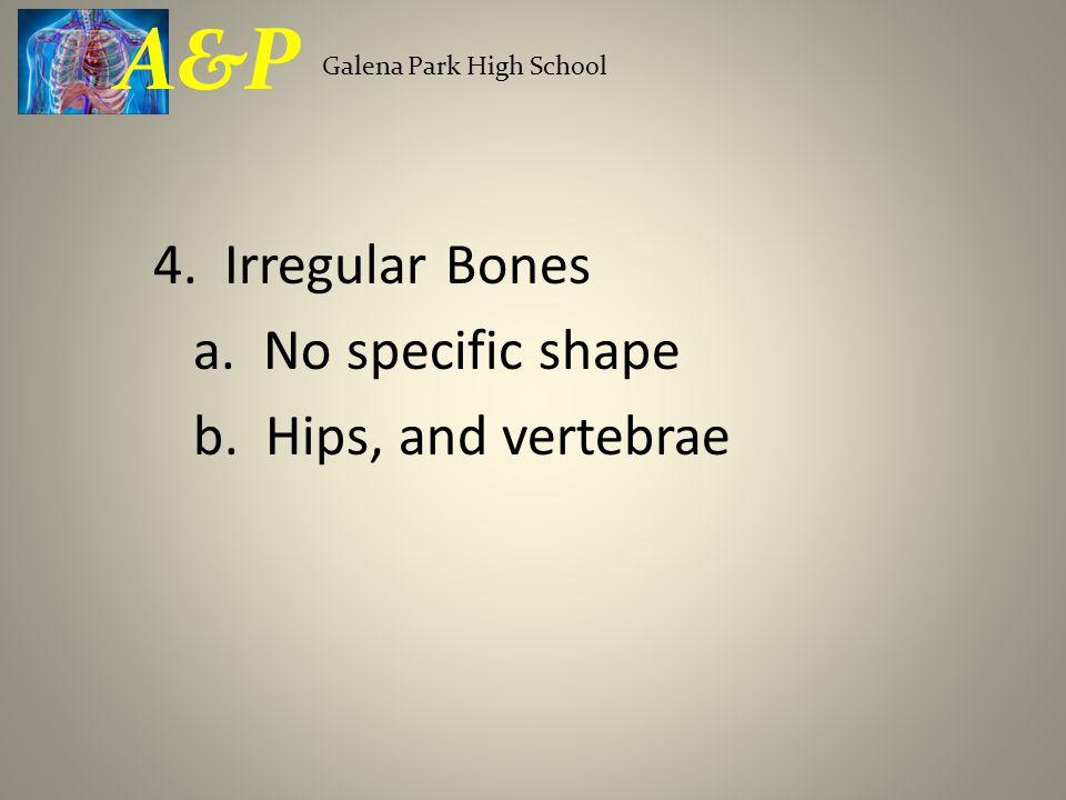 B.Pectoral Girdle 1. Clavicle (2) Collar bone 2. Scapula (2) Shoulder blade 3.