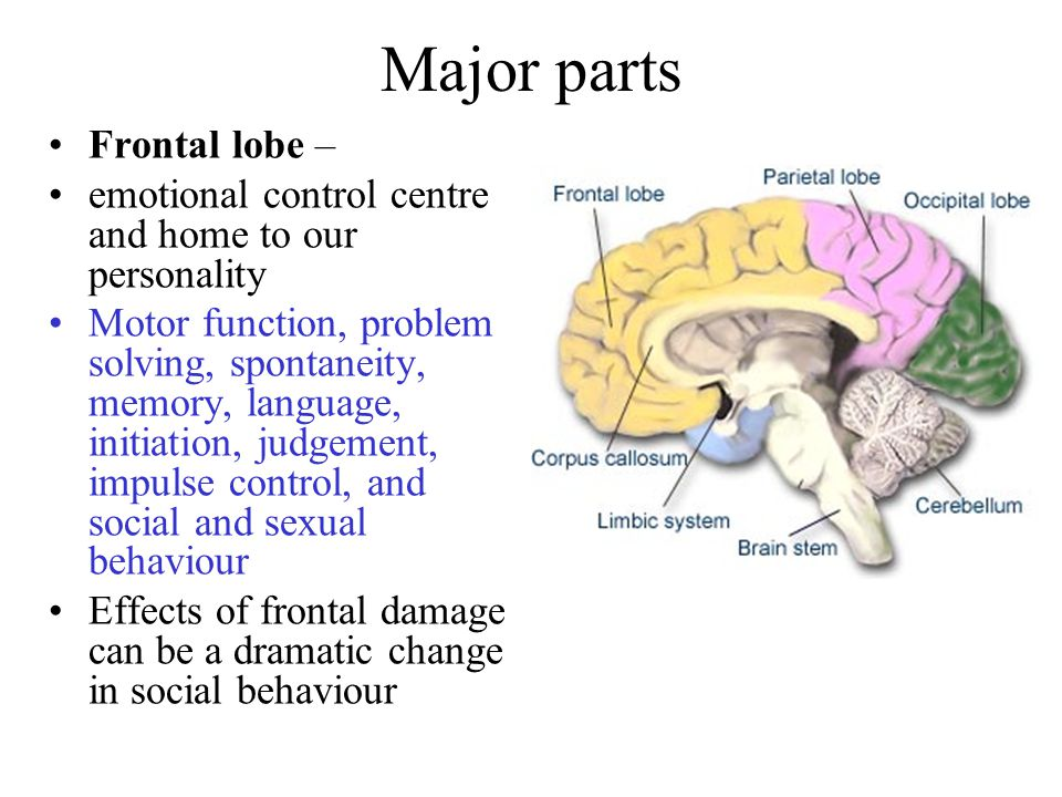 Major parts Frontal lobe – emotional control centre and home to our personality Motor function, problem solving, spontaneity, memory, language, initiation, judgement, impulse control, and social and sexual behaviour Effects of frontal damage can be a dramatic change in social behaviour