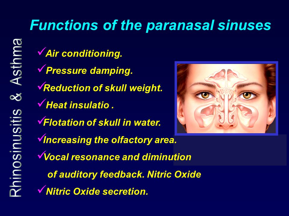 Functions of the paranasal sinuses Air conditioning. Pressure damping. Reduction of skull weight. Heat insulatio. Flotation of skull in water. Increas