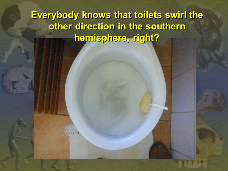 Everybody knows that toilets swirl the other direction in the southern hemisphere, right?