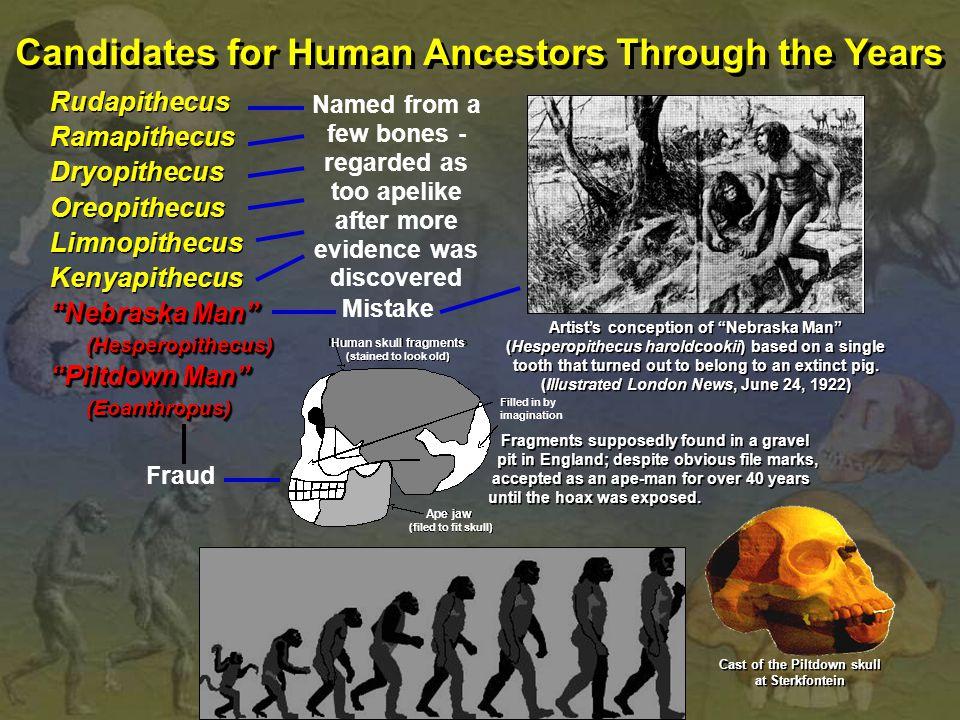 "Candidates for Human Ancestors Through the Years Rudapithecus Ramapithecus Dryopithecus Oreopithecus Limnopithecus Kenyapithecus ""Nebraska Man"" (Hespe"