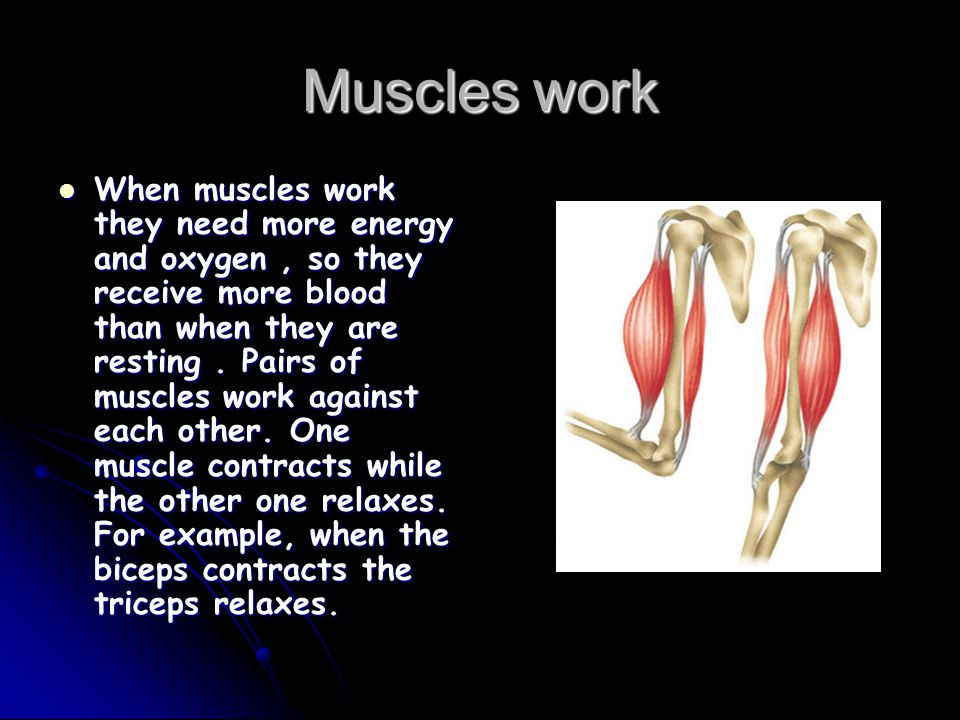 Muscles work When muscles work they need more energy and oxygen, so they receive more blood than when they are resting. Pairs of muscles work against