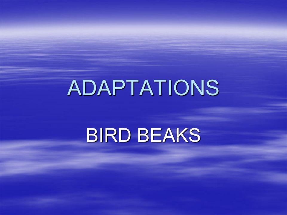 ADAPTATIONS BIRD BEAKS