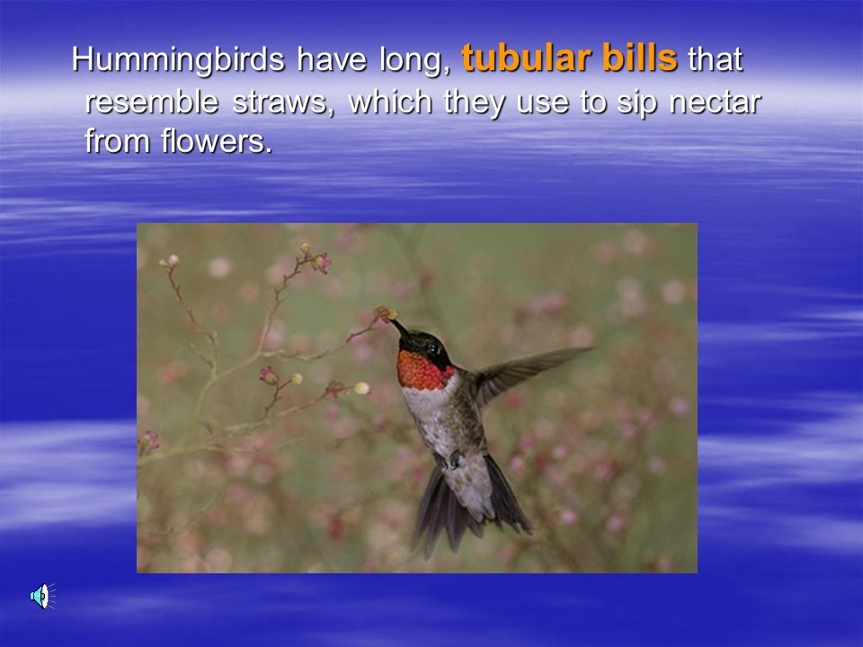 Hummingbirds have long, tubular bills that resemble straws, which they use to sip nectar from flowers.