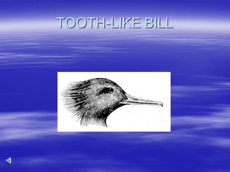 TOOTH-LIKE BILL