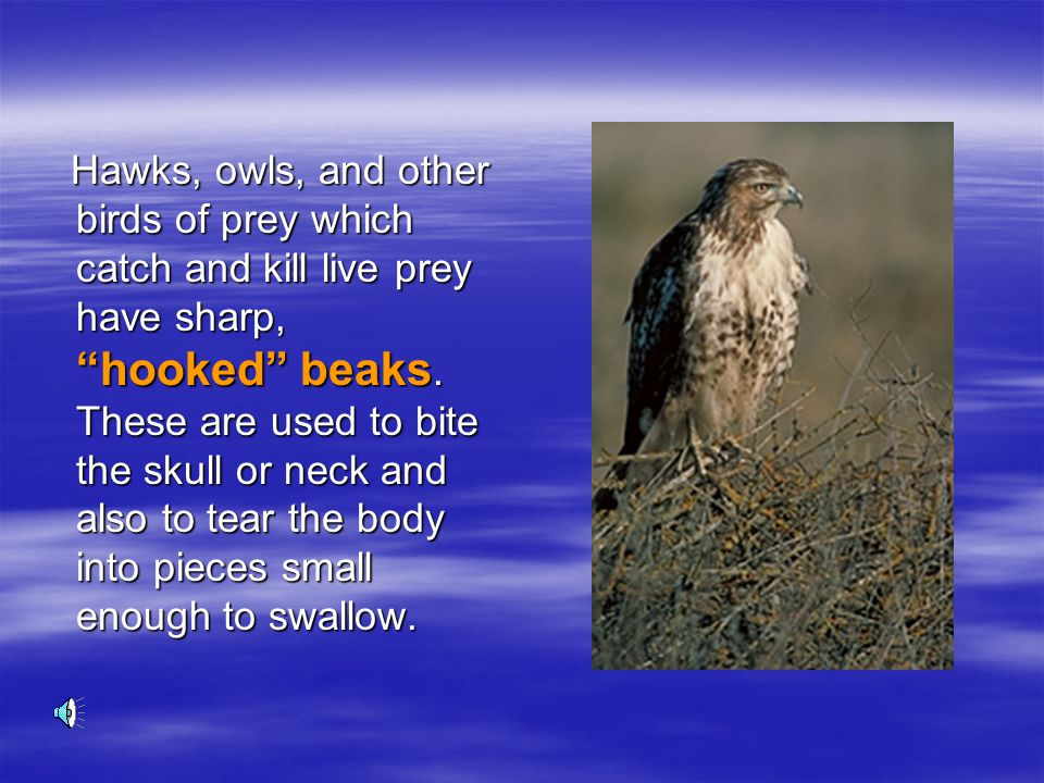 Hawks, owls, and other birds of prey which catch and kill live prey have sharp, hooked beaks.