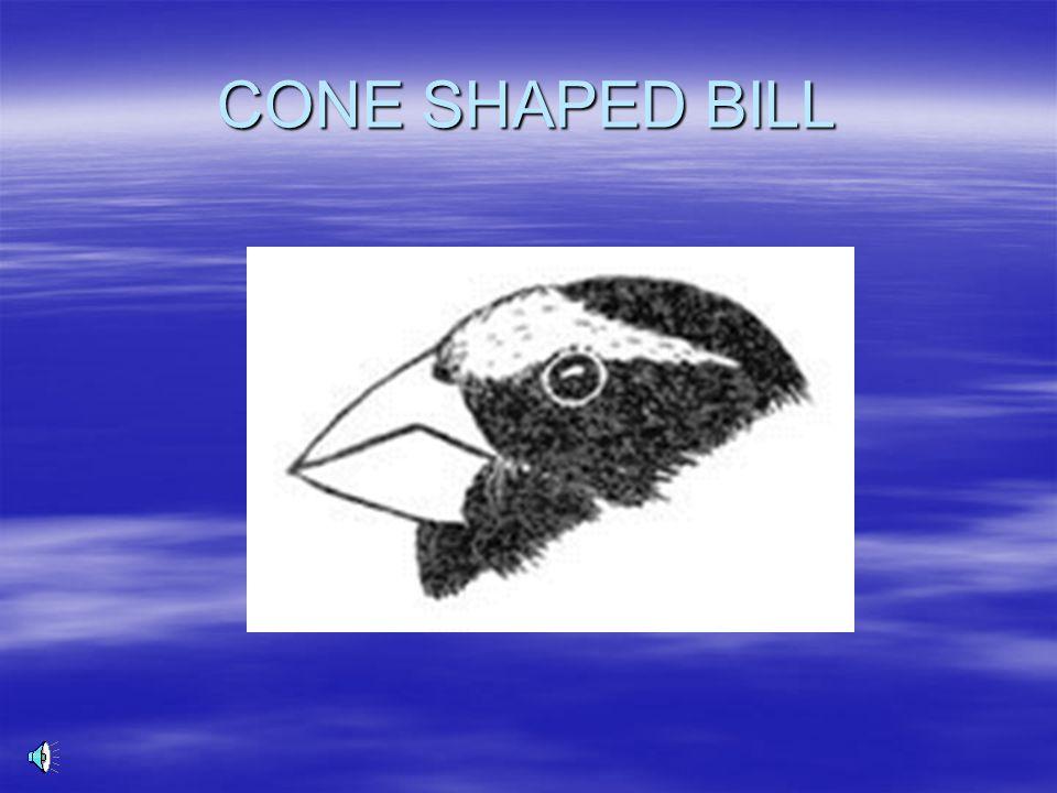 CONE SHAPED BILL