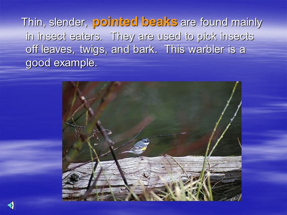 Thin, slender, pointed beaks are found mainly in insect eaters.