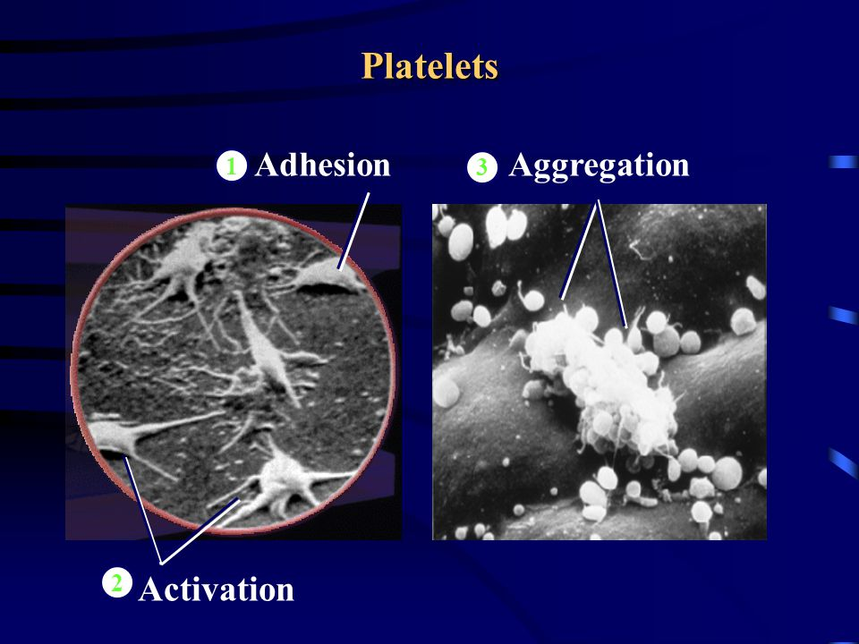 Adhesion Platelets Aggregation 1 Activation 2 3