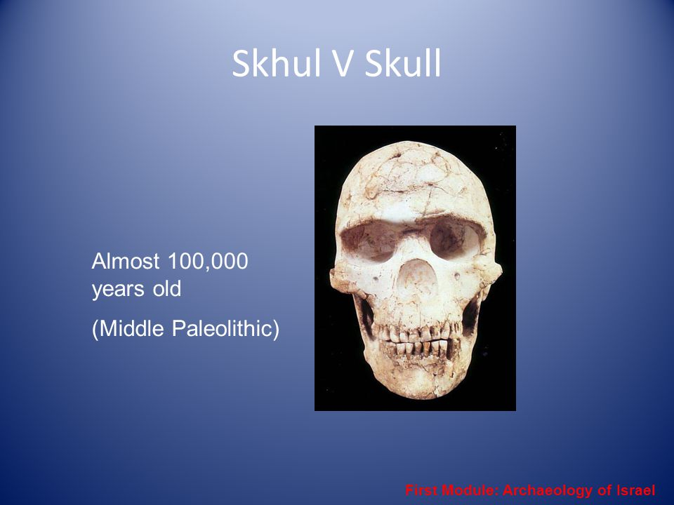 Skhul V Skull Almost 100,000 years old (Middle Paleolithic) First Module: Archaeology of Israel
