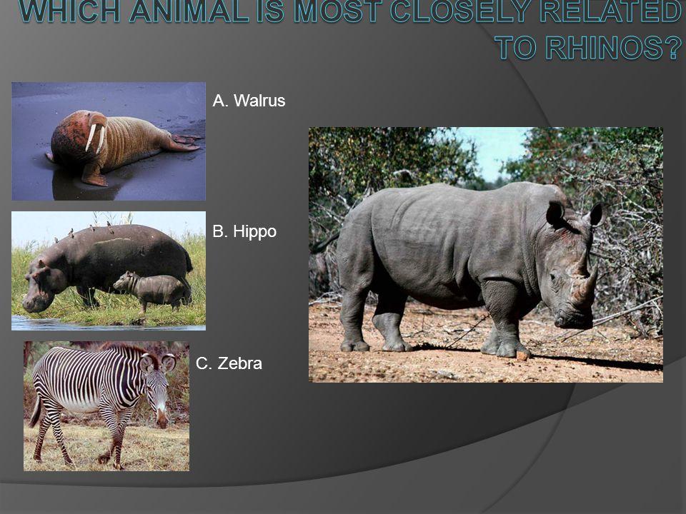 A. Walrus B. Hippo C. Zebra