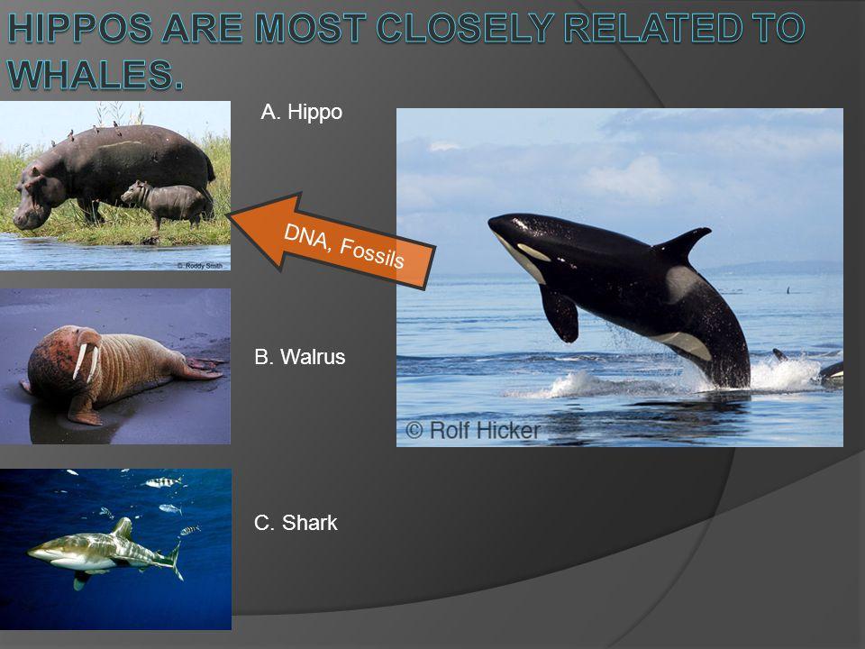 A. Hippo B. Walrus C. Shark DNA, Fossils