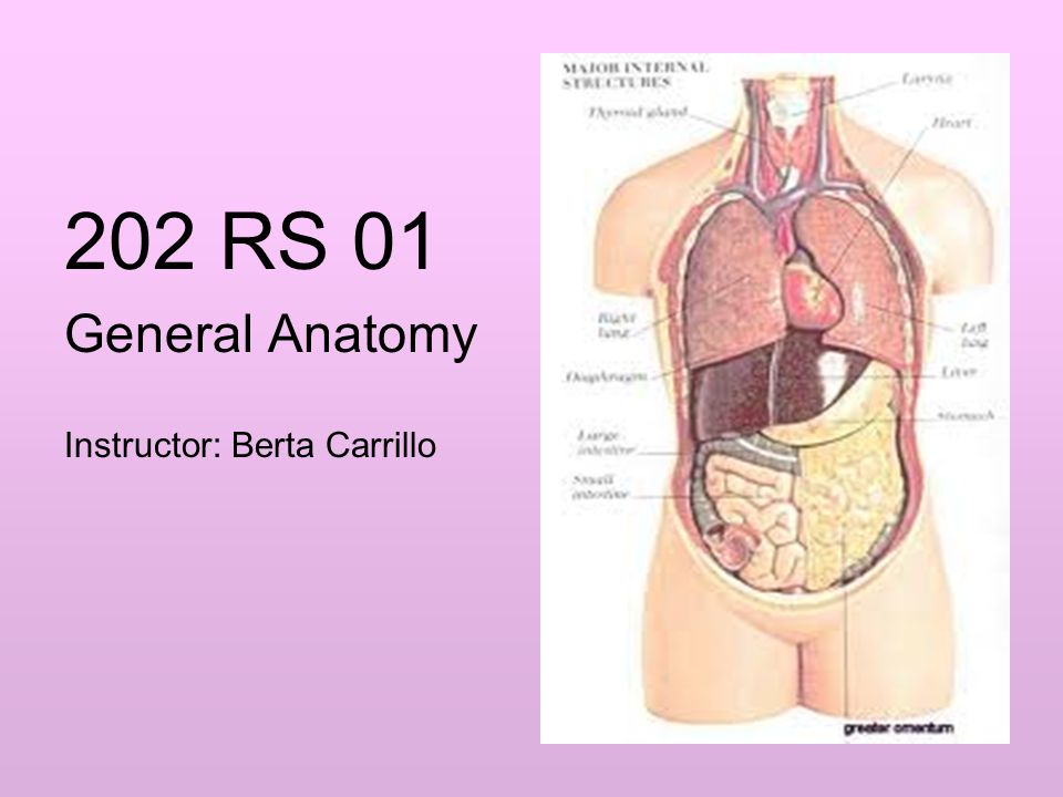 202 RS 01 General Anatomy Instructor: Berta Carrillo