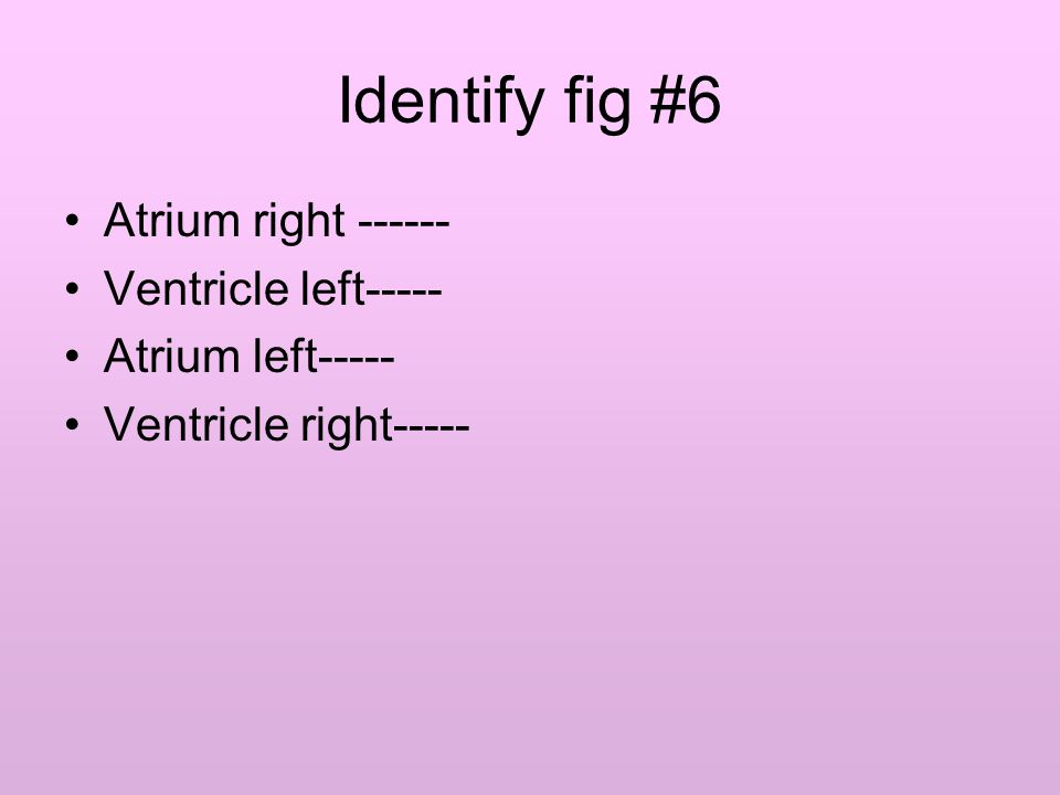 Identify fig #6 Atrium right ------ Ventricle left----- Atrium left----- Ventricle right-----