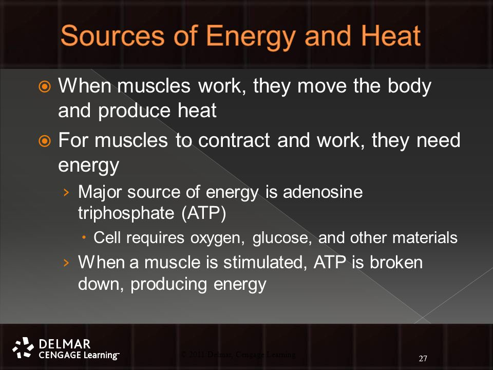 © 2010 Delmar, Cengage Learning 27 © 2011 Delmar, Cengage Learning  When muscles work, they move the body and produce heat  For muscles to contract and work, they need energy › Major source of energy is adenosine triphosphate (ATP)  Cell requires oxygen, glucose, and other materials › When a muscle is stimulated, ATP is broken down, producing energy 27