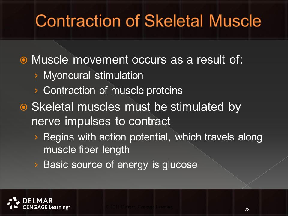 © 2010 Delmar, Cengage Learning 28 © 2011 Delmar, Cengage Learning  Muscle movement occurs as a result of: › Myoneural stimulation › Contraction of muscle proteins  Skeletal muscles must be stimulated by nerve impulses to contract › Begins with action potential, which travels along muscle fiber length › Basic source of energy is glucose 28