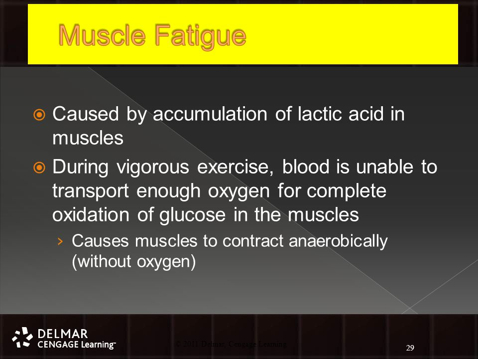 © 2010 Delmar, Cengage Learning 29 © 2011 Delmar, Cengage Learning  Caused by accumulation of lactic acid in muscles  During vigorous exercise, blood is unable to transport enough oxygen for complete oxidation of glucose in the muscles › Causes muscles to contract anaerobically (without oxygen) 29
