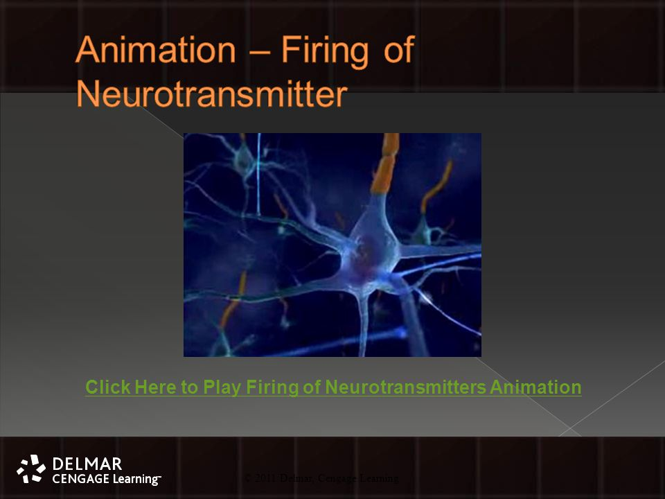 © 2010 Delmar, Cengage Learning 38 © 2011 Delmar, Cengage Learning Click Here to Play Firing of Neurotransmitters Animation