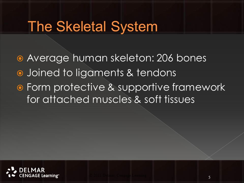 © 2010 Delmar, Cengage Learning 5 © 2011 Delmar, Cengage Learning  Average human skeleton: 206 bones  Joined to ligaments & tendons  Form protective & supportive framework for attached muscles & soft tissues 5