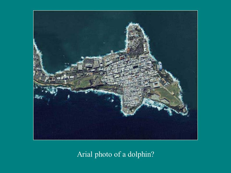 Arial photo of a dolphin?