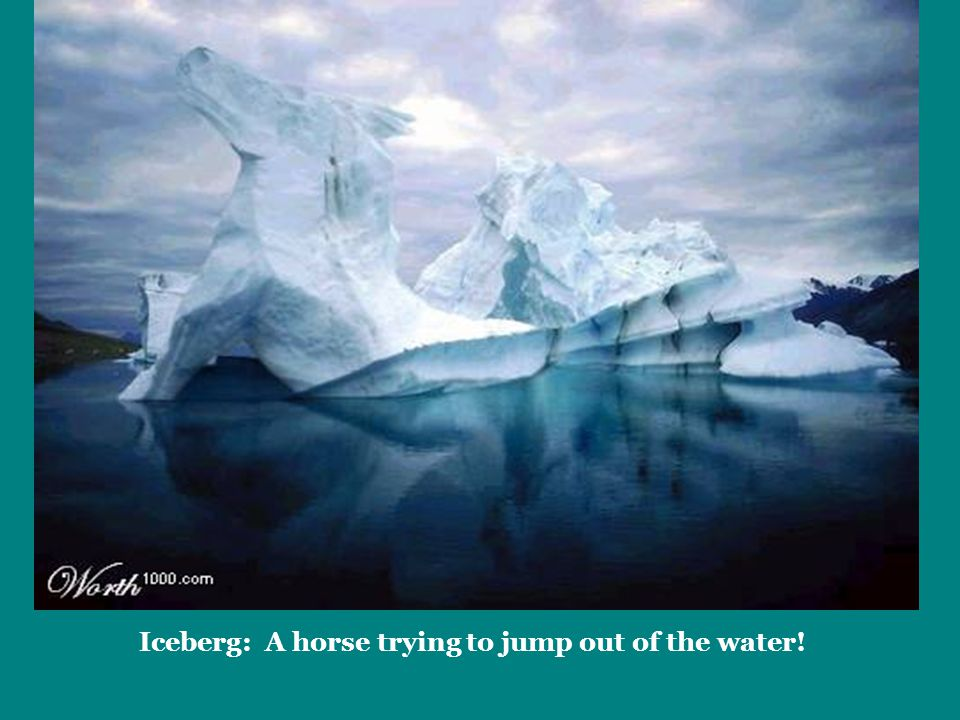 Iceberg: A horse trying to jump out of the water!