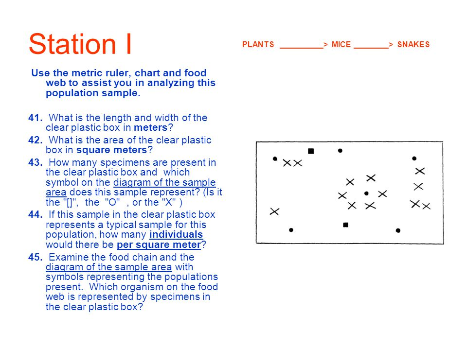 Station I Use the metric ruler, chart and food web to assist you in analyzing this population sample. 41. What is the length and width of the clear pl
