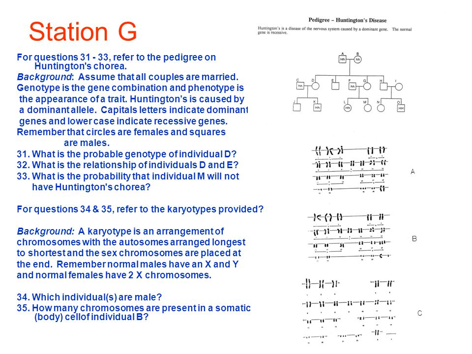 Station G For questions 31 - 33, refer to the pedigree on Huntington's chorea. Background: Assume that all couples are married. Genotype is the gene c