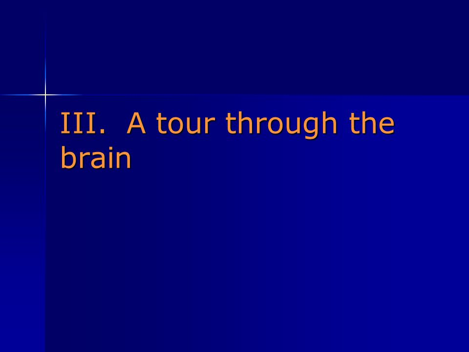 III. A tour through the brain