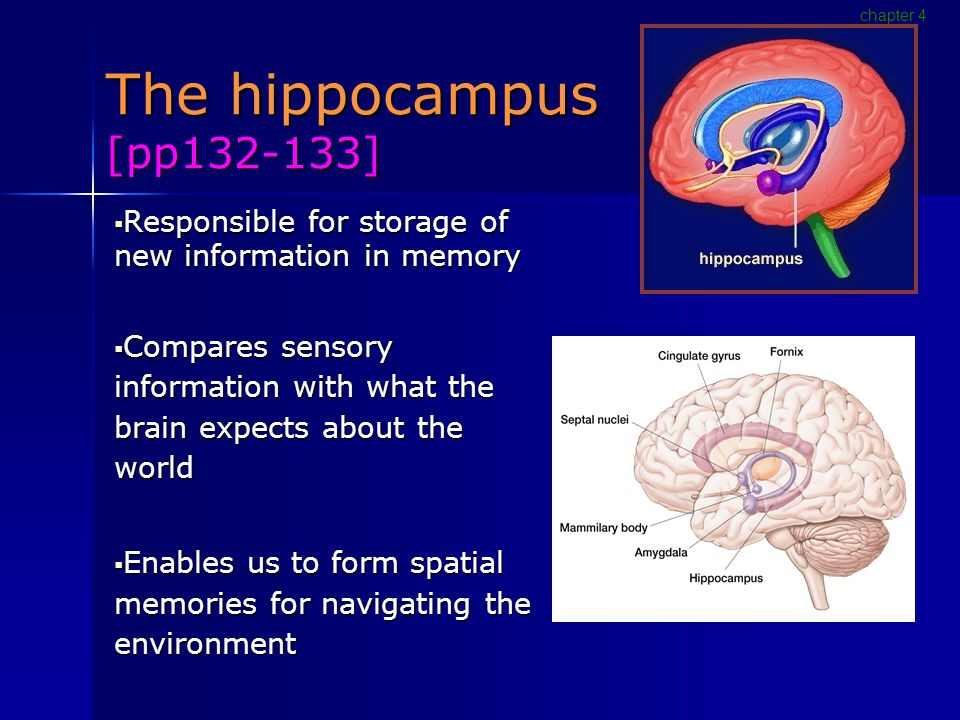 The hippocampus [pp132-133]  Responsible for storage of new information in memory  Compares sensory information with what the brain expects about the world  Enables us to form spatial memories for navigating the environment chapter 4
