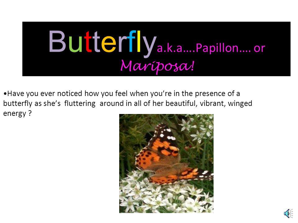 ButterflyButterfly a.k.a. Mariposa!