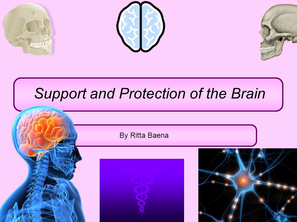 Support and Protection of the Brain By Ritta Baena