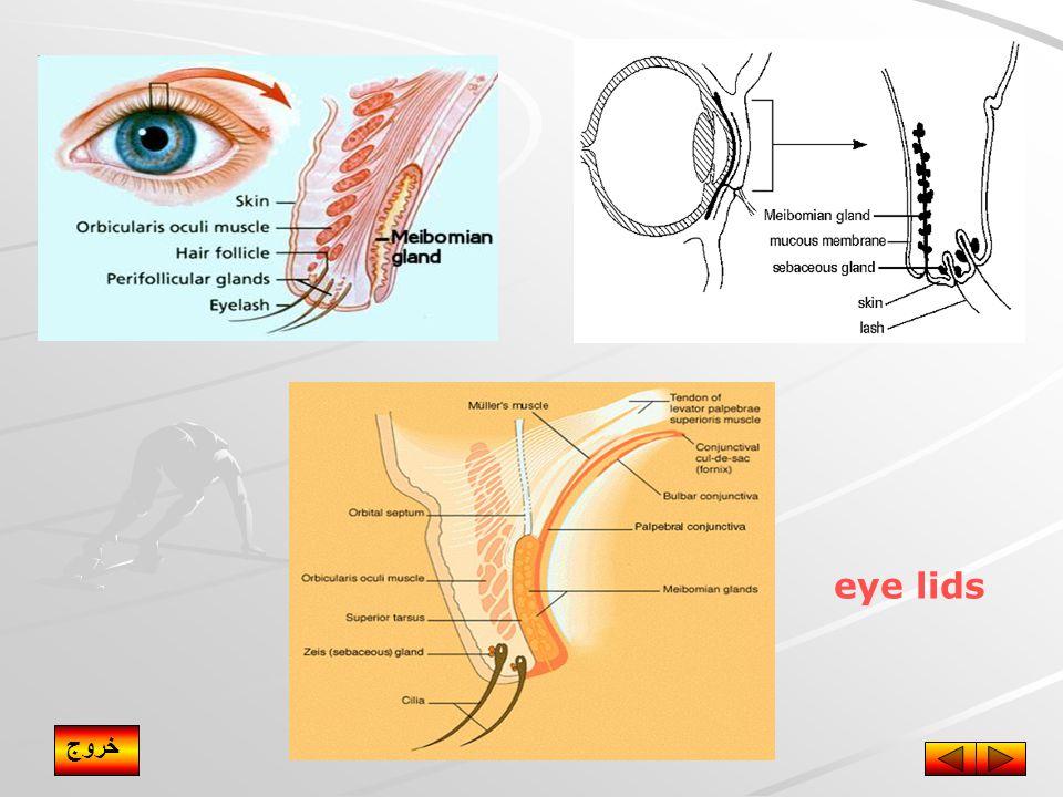 eye lids خروج