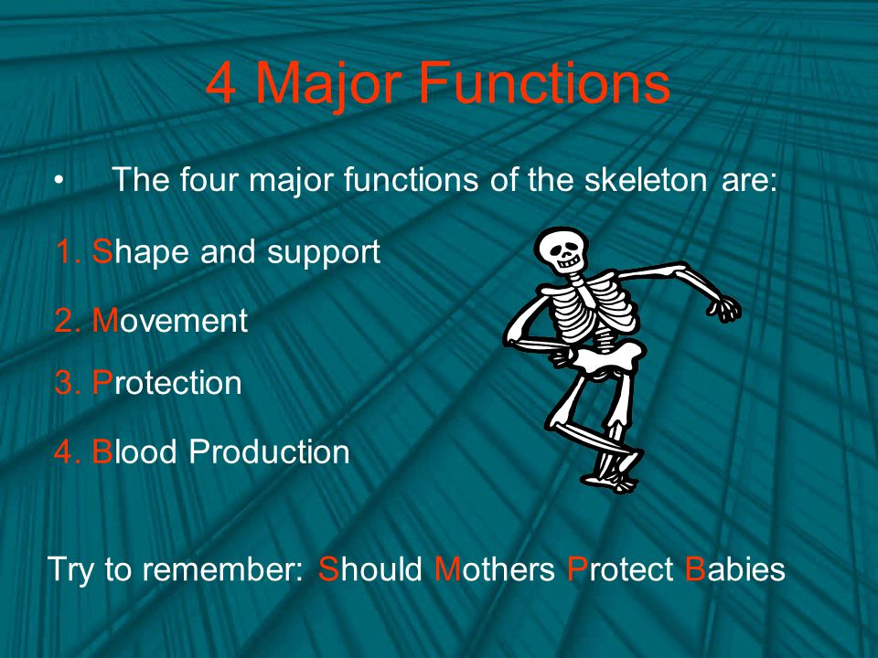 4 Major Functions The four major functions of the skeleton are: Try to remember: Should Mothers Protect Babies 1.