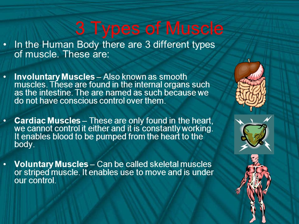 3 Types of Muscle In the Human Body there are 3 different types of muscle.