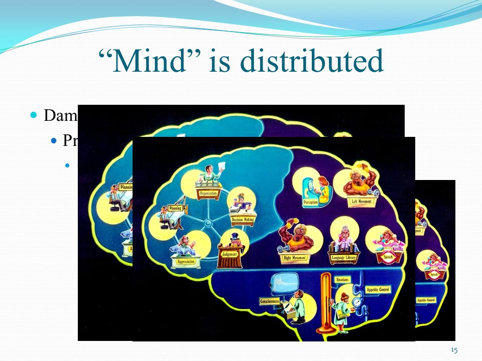 Mind is distributed Damage to different areas of the brain Produces damage to different aspects of cognition and behaviour 15
