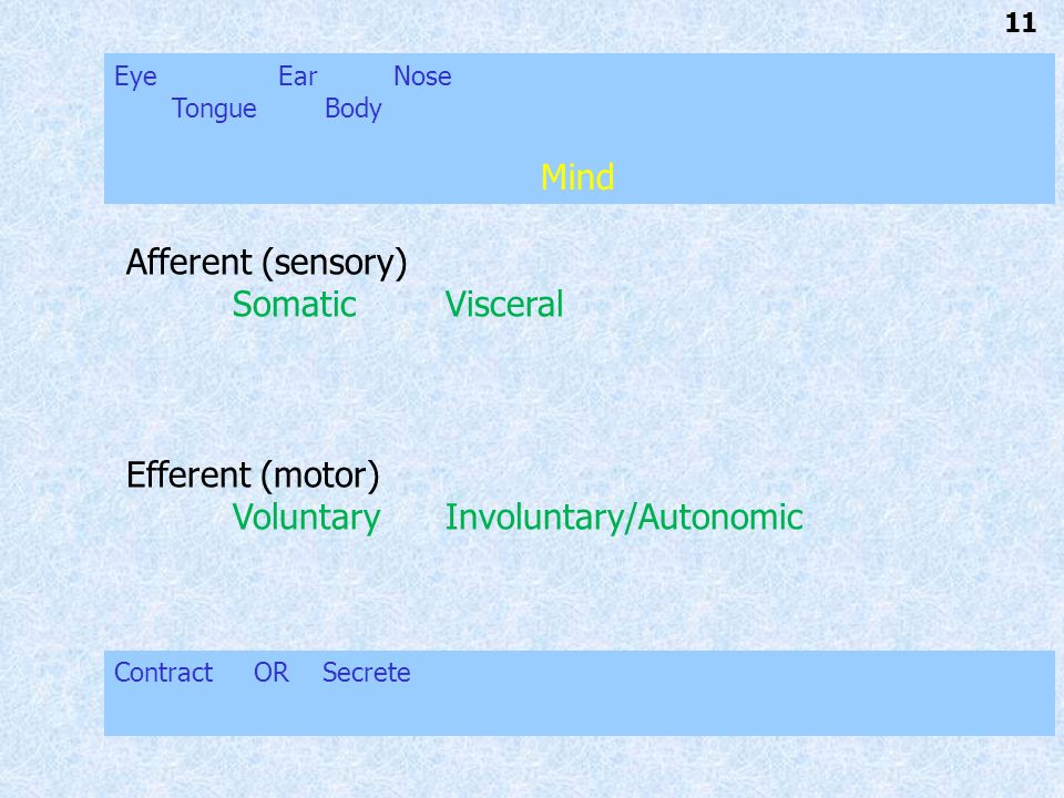 11 Afferent (sensory) SomaticVisceral Efferent (motor) VoluntaryInvoluntary/Autonomic Eye Ear Nose Tongue Body Mind Contract OR Secrete