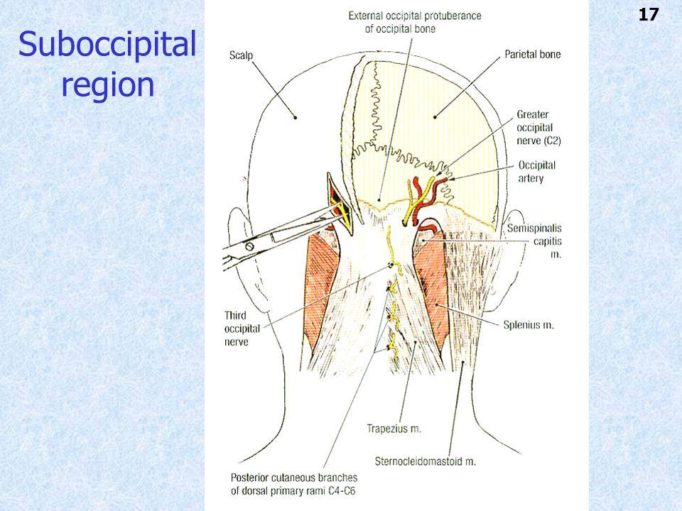 Suboccipital region 17