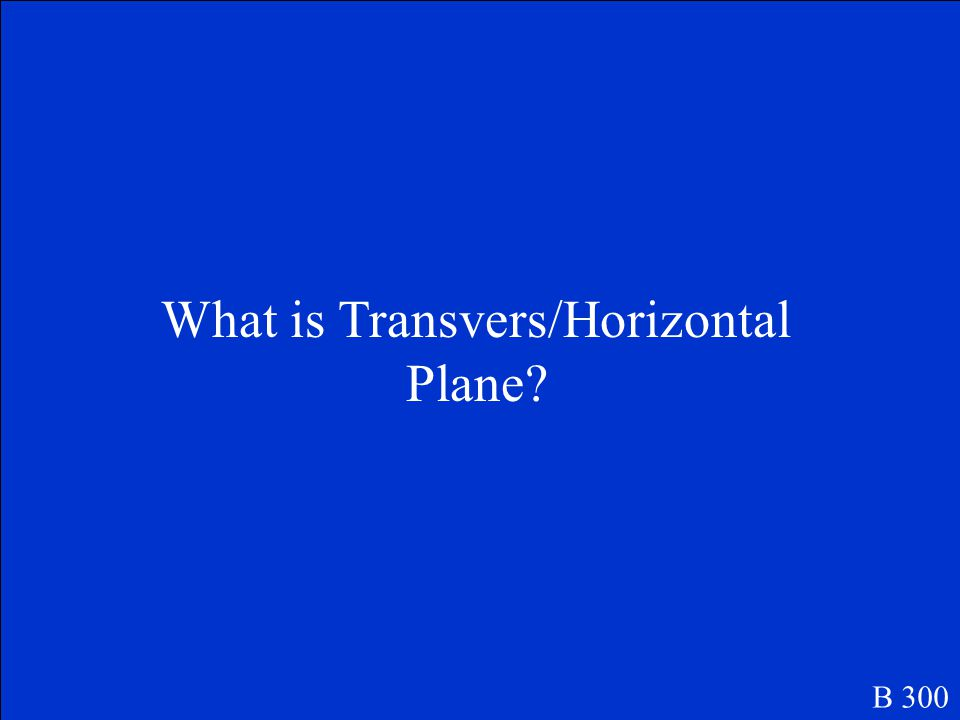 Horizontal plane that bisects the body into top and bottom B 300