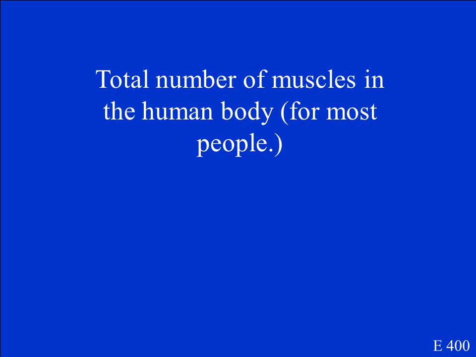 What are the obliques E 300