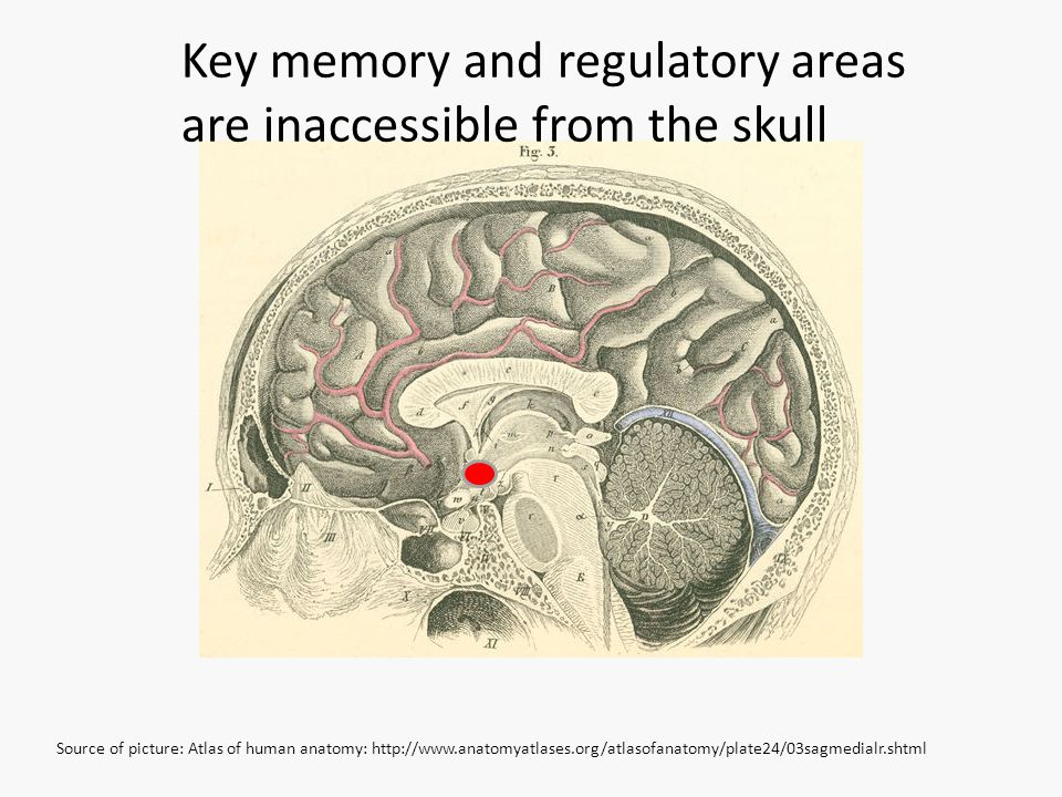 Source of picture: Atlas of human anatomy: http://www.anatomyatlases.org/atlasofanatomy/plate24/03sagmedialr.shtml Key memory and regulatory areas are inaccessible from the skull