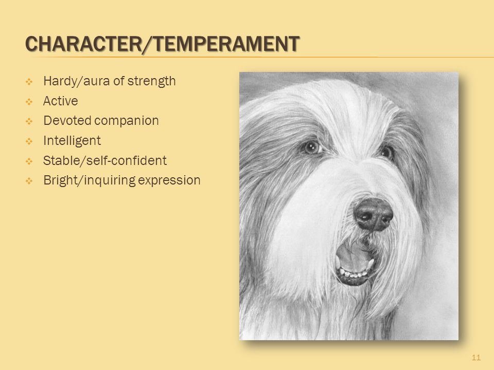 CHARACTER/TEMPERAMENT  Hardy/aura of strength  Active  Devoted companion  Intelligent  Stable/self-confident  Bright/inquiring expression 11