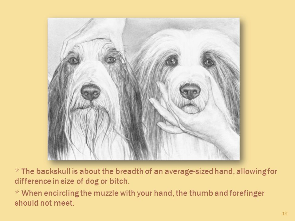 13 * The backskull is about the breadth of an average-sized hand, allowing for difference in size of dog or bitch. * When encircling the muzzle with y