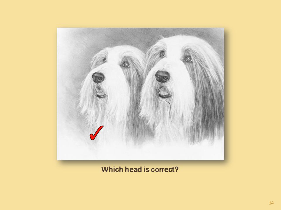 14 Which head is correct?